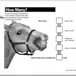 HorseFacts&MathGames page