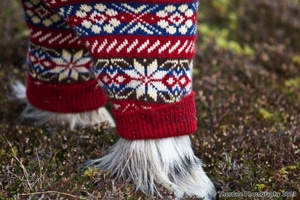 c3d5d9e0ec Sweaters for Shetland Ponies