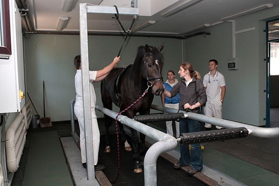 BSc Equine Science with Rehabilitation Therapies, Full ...