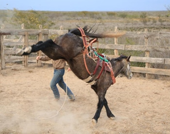 how to become a horse trainer in canada