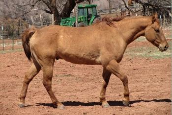 horse shoulder angle