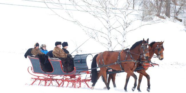 horse drawn sleigh rally horse lover s math