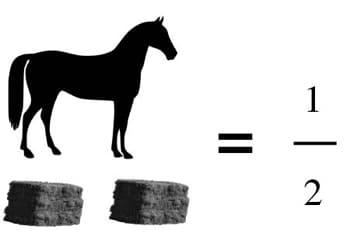 An average sized horse will eat approximately 2 bales of hay every 10 days.