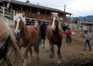 Sombrero Ranch horses