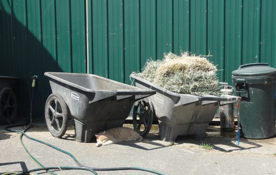 hay in wheelbarrow