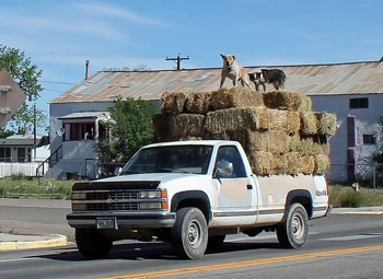 pickup truck loaded with hay