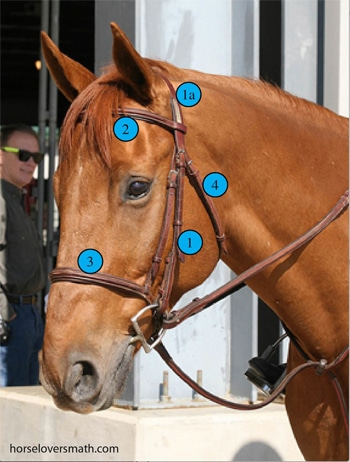 Measuring A Horse For A Bridle Horse Lover S Math