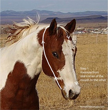measure a horse for a bridle