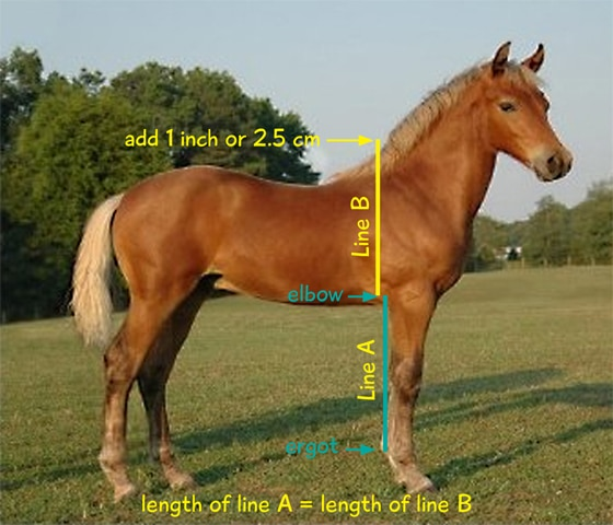 Calculate foals mature height