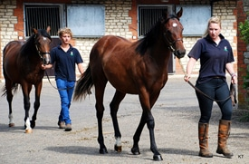 Cost of Thoroughbred Yearling