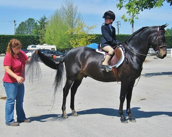 morgan horse dressage