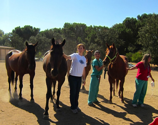 equine blood donor herd