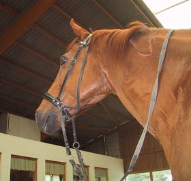 A cross-under bitless bridle