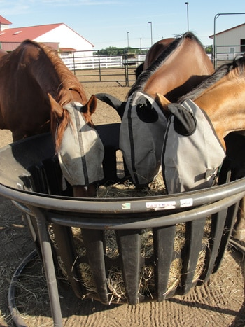 3 horses feeding from hay feeder