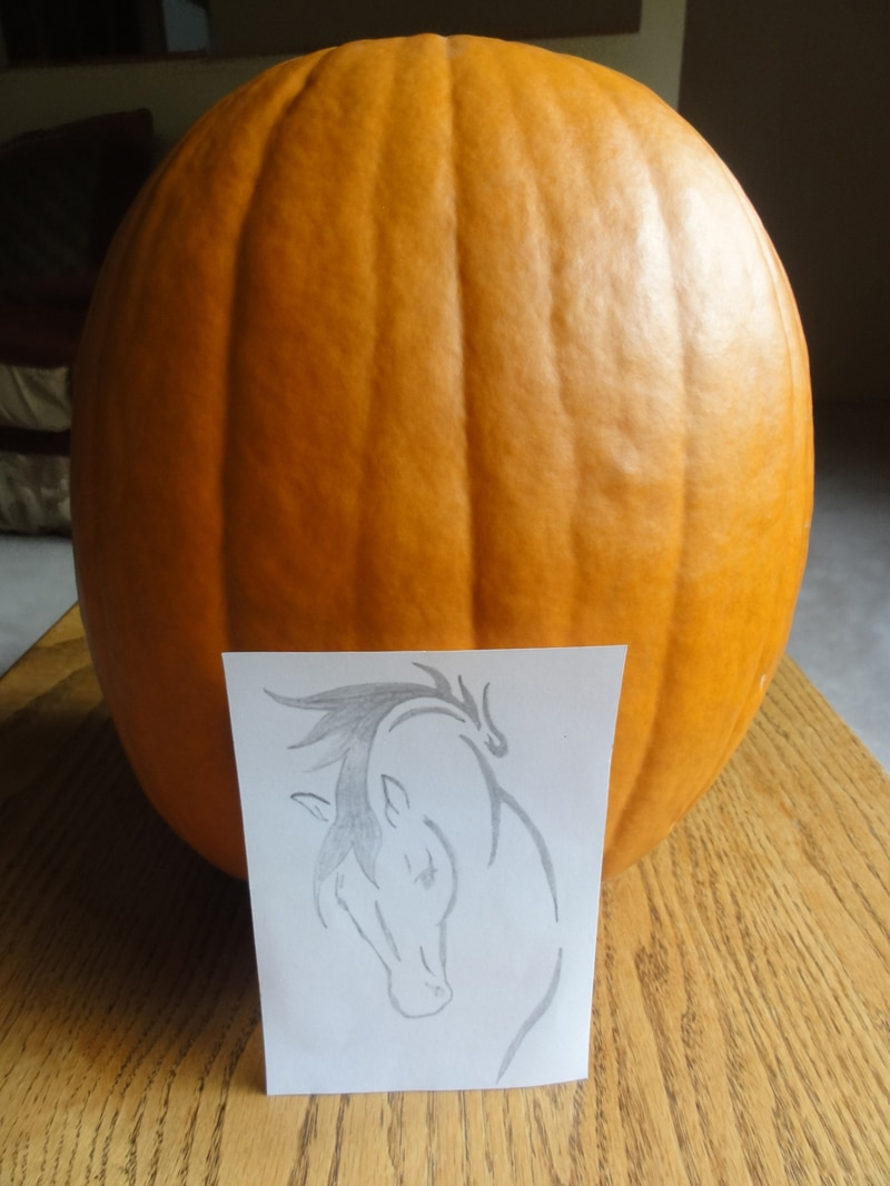 Make A Horse Jack O Lantern Horse Lover S Math