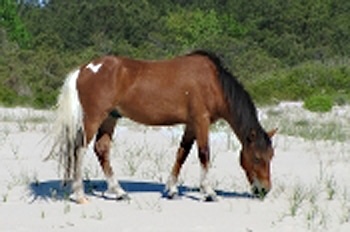 Assateague Lightening