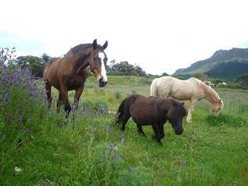 Introducing a horse to spring grass