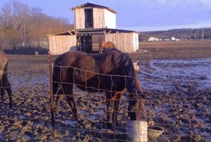 muddy horse paddocks