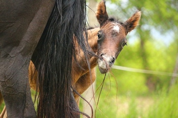 mare foal behaviour
