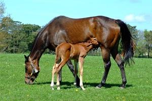 horse breeding farm