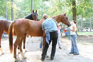 vet check horse endurance