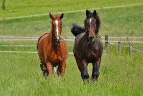 horse paddock size recommendations