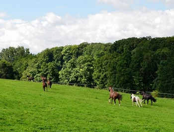 horse paddock size requirements