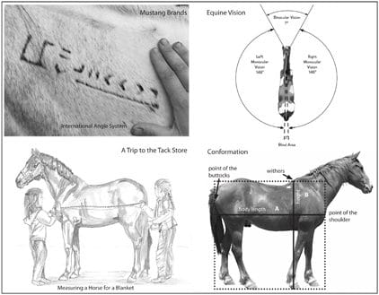 Horse Lover's Math July special